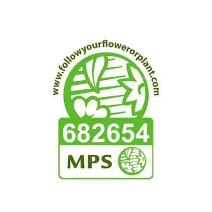 Vignet-MPS